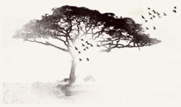 arbre beauté primale