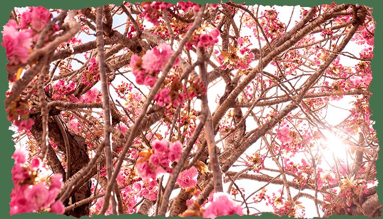 Astuces beauté : offrez-vous un nettoyage de printemps !
