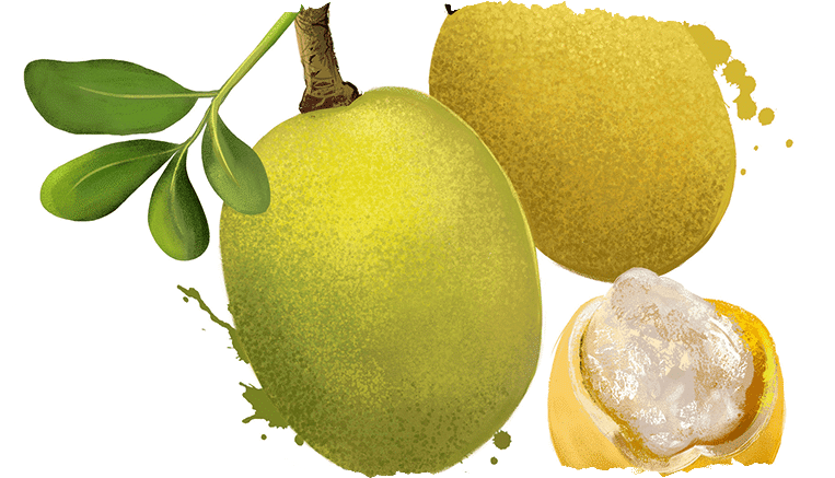 L'huile de Marula : l'alliée anti-âge des peaux matures