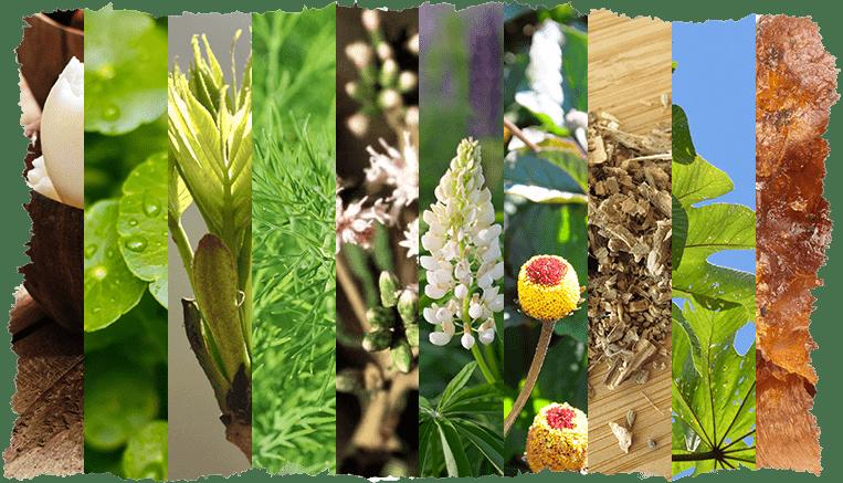 10 actifs naturels peaux matures