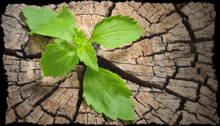 Feuille tronc arbre concept anti-âge